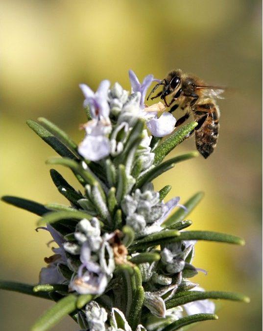 Alcuni consigli per rendere i nostri giardini un rifugio per le api dopo la stagione fredda