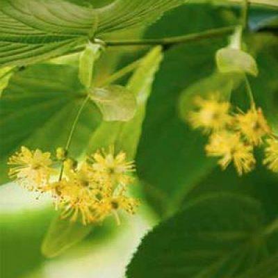 mieli monflora miele di tiglio